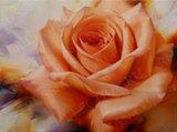 Репродукция в раме (Оранжевая роза, 70х50)